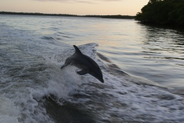Dolphin behind our boat