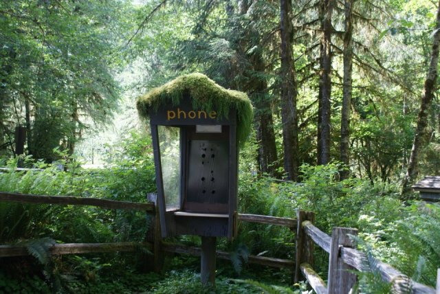 Mossy phone booth; Olympic National Park