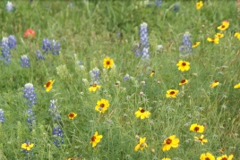 Texas spring bouquet
