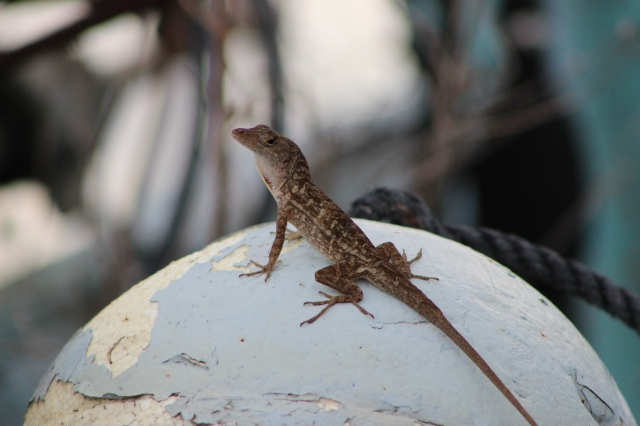 lizard on a buoy