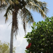 palm tree and hibiscus
