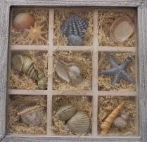 shells in a box