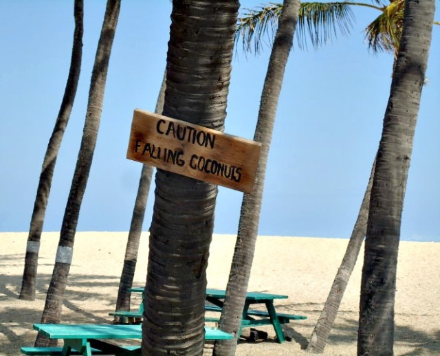 Caution:  Falling Coconuts